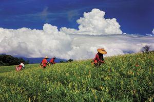 縱谷八月金色風華-赤柯山-10