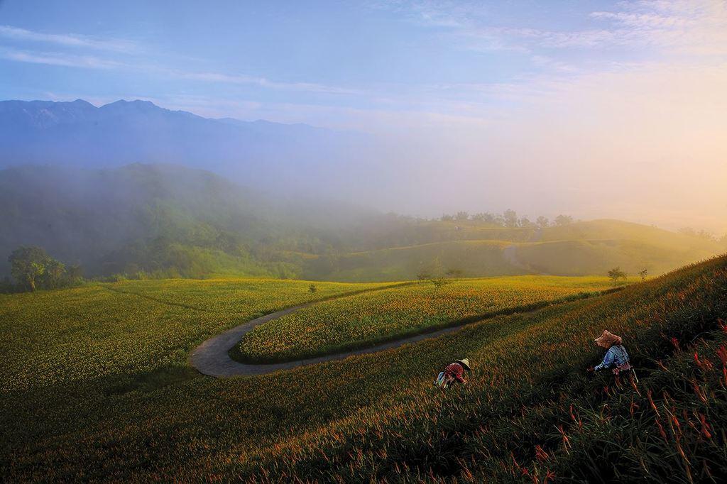 縱谷八月金色風華-六十石山-20
