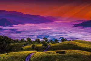 縱谷八月金色風華-六十石山-22